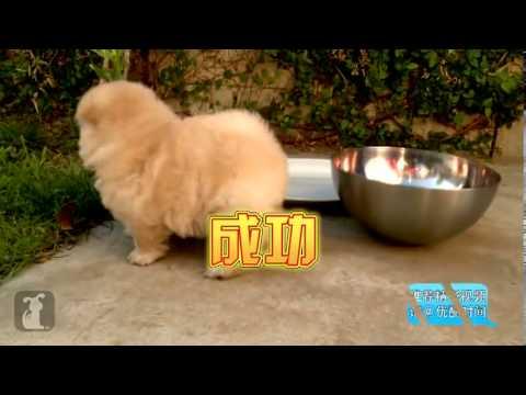 你知道狗狗會搞笑嗎?你知道你出門後狗狗都在做甚麼嗎?