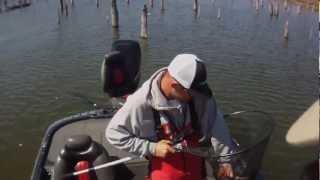 Video Lake Fork Sight Fishing MP3, 3GP, MP4, WEBM, AVI, FLV Januari 2019