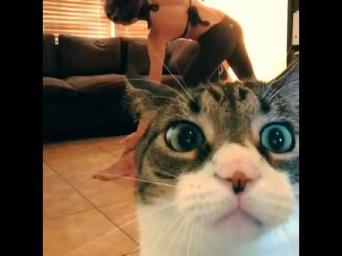 hilarious cat video of the day...haaa omg! I LOVE ANIMALS!