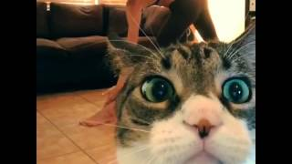 This Cat Has Had Enough With His Owner's Yoga Exercise
