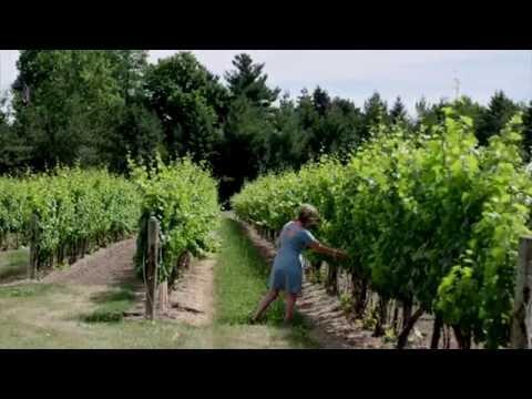 Take time to explore - Niagara Wineries, Ontario, Canada