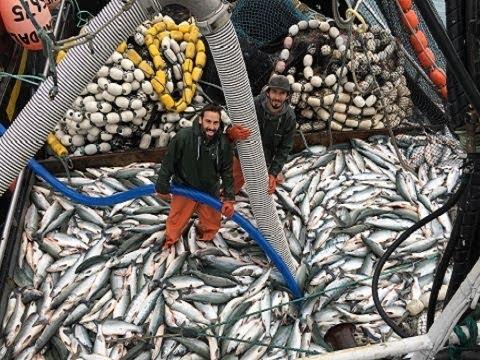 Amazing World Big Catch Trawler Fishing Boat - Lot Of Live Fish Catching At Sea - Thời lượng: 12 phút.