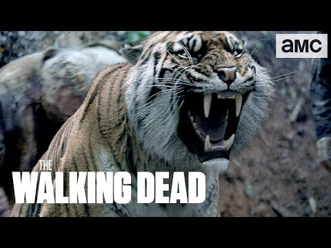 Download (SPOILERS) 'Shiva Saves the Day' Talked About Scene Ep. 804 | The Walking Dead HD Mp4 3GP Video and MP3