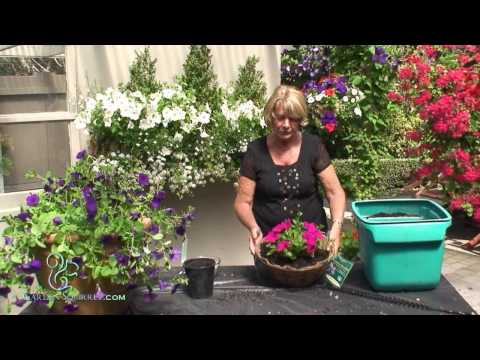 How to Make a Hanging Basket of Petunias (Easy)