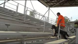 St Poodle Service Dog In Training Mobility Stairs