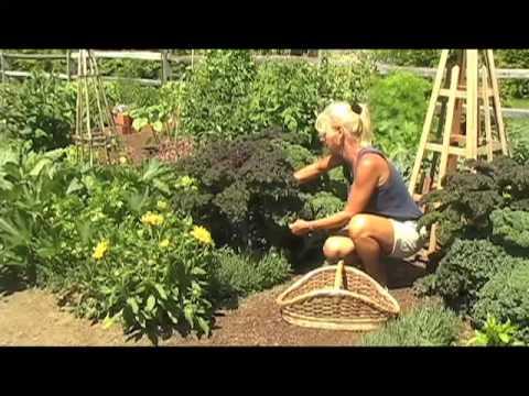 Vegetable Gardening from White Flower Farm, Part 3