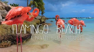 Flamings on a private island in the Caribbean, or to be more specific on renaissance island in Aruba. This awesome little island is a 10 minute boat ride from ...