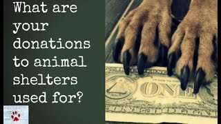 Donations to animal shelters - Where does your money go? by The Orphan Pet