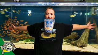 1 Pound Of Salad Shrimp For 800 Gallon Aquarium by Aquarium Co-Op