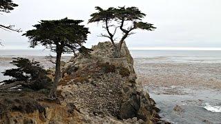 Monterey (CA) United States  city photo : Tour of Monterey & The Pacific Coast, California, USA