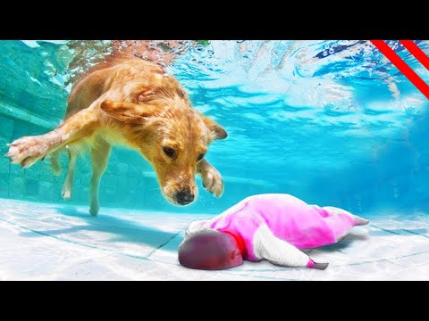 Unbelievable ANIMALS That SAVED People's Lives