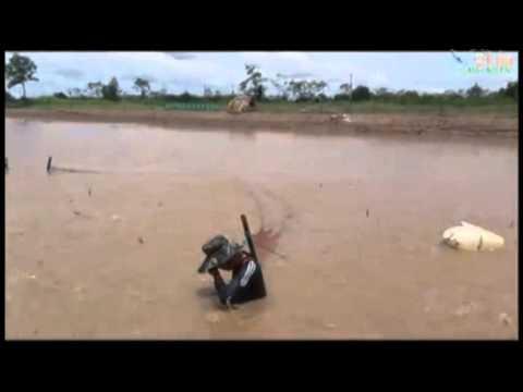 DEFORESTATION TO FARM SHRIMP