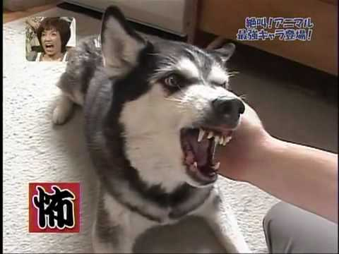Funny Dogs Making Scary Faces