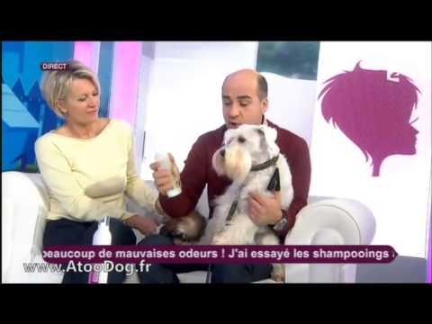 Comment laver votre chien à poils durs - France 2 05-02-2014