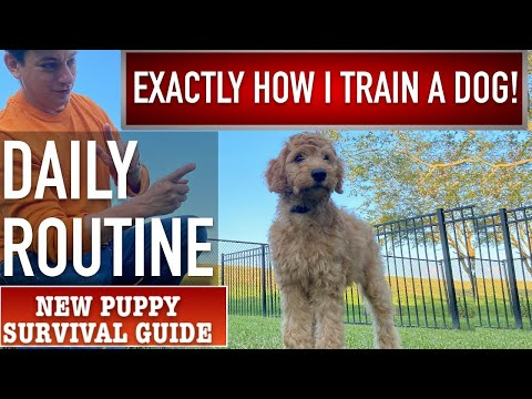 This is EXACTLY How I Train a Dog! Daily Puppy Training Routine! NEW PUPPY SURVIVAL GUIDE  (Ep 13)