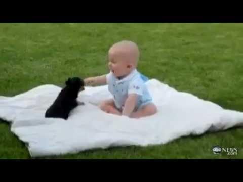 Très mignon Un chiot joue avec un bébé