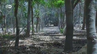 Mesir mengubah gurun menjadi hutan
