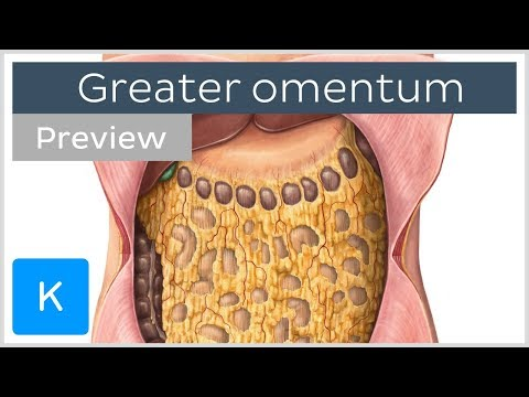 Overview of the Greater Omentum (preview) - Human Anatomy |Kenhub