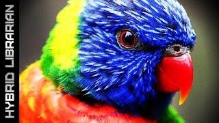 Video World's 15 Most Intelligent Animals MP3, 3GP, MP4, WEBM, AVI, FLV November 2018
