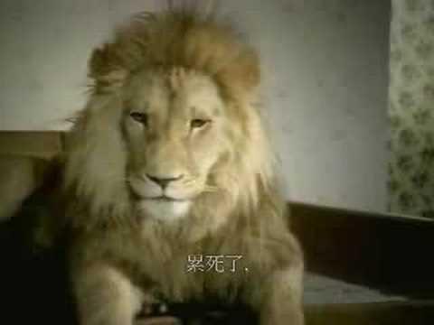 原來獅子也會偷情,那這樣他的下場是被吃掉嗎!?