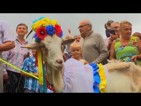 Ουκρανία: Διαγωνισμός ομορφιάς για κατσίκες
