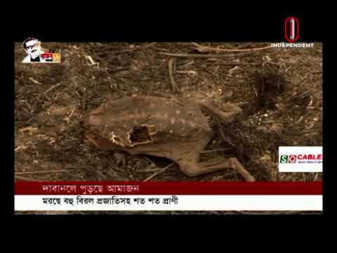 The world's most famous Amazon forest is burning in the fire (16-09-2020) Courtesy:IndependentTV
