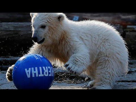 Χέρτα: H νεογέννητη πολική αρκουδίτσα του Βερολίνου