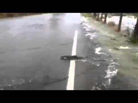 Des poissons traversent une route suite à un débordement de rivière