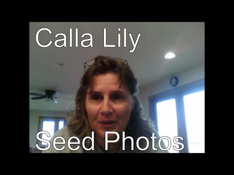 Ep. 338 Calla Lily Photos
