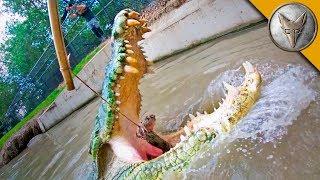 Crocodile Feeding FRENZY! by Brave Wilderness