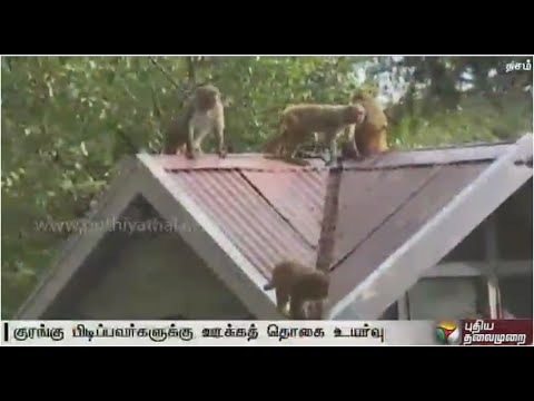 Monkey-catchers-to-get-Rs-500-per-catch-in-Himachal-Pradesh