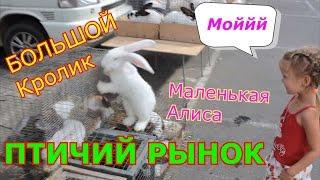 VLOG Птичий рынок КРОЛИК и РЫБКА Новые Друзья