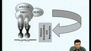 Mod-03 Lec-23 Mechanism Of Transcriptional Activation By Nuclear Receptors