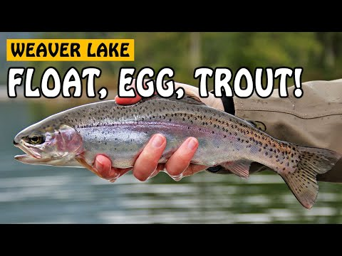 rainbowtrout - For more fishing videos, please visit: http://www.fishingwithrod.com Float fishing with bait is the most basic technique used to catch rainbow trout. In this...