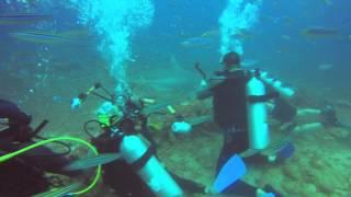 Beqa Island Fiji  city images : Shark Dive 1 Beqa Island FIJI