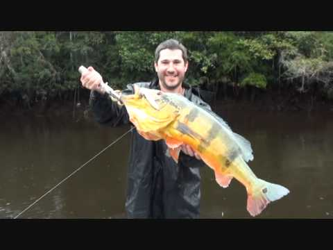 pescaria de tucunaré açú em barcelos - 2010