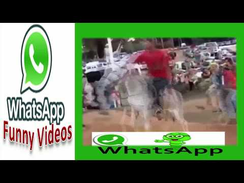 Violence On Donkey | India & Pakistan Most Funny 2017 Whatsapp Video