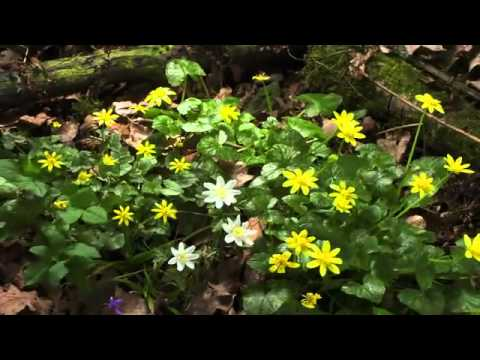 BBC Planet Earth Seasonal Forests spring.flv