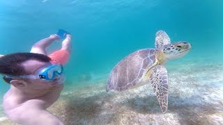 Riviera Maya Mexico  City pictures : GoPro - Riviera Maya, Mexico (Proposal, Turtles, Whale Sharks, Monkeys and more)
