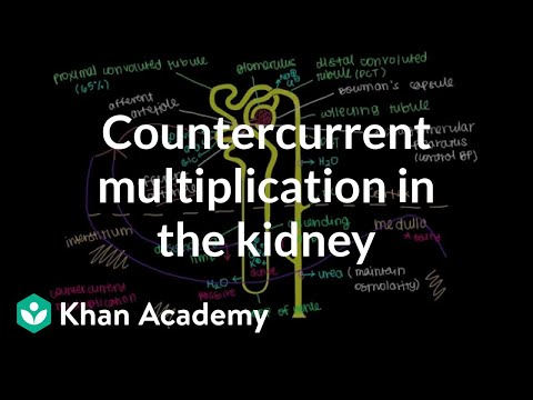 Countercurrent multiplication in the kidney | Renal system physiology | NCLEX-RN | Khan Academy