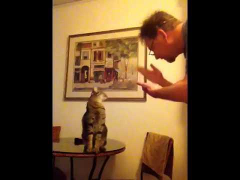 ecco cos'è capace di fare un gatto sordo!