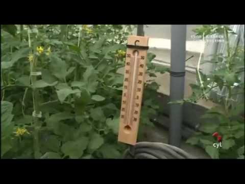 Riego, calefacción radiante e hidroponia para los tomates de Huérmeces, Burgos
