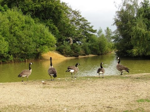 Searching for the New Forest Deer from Cadman Pool round  | the new forest  Walks