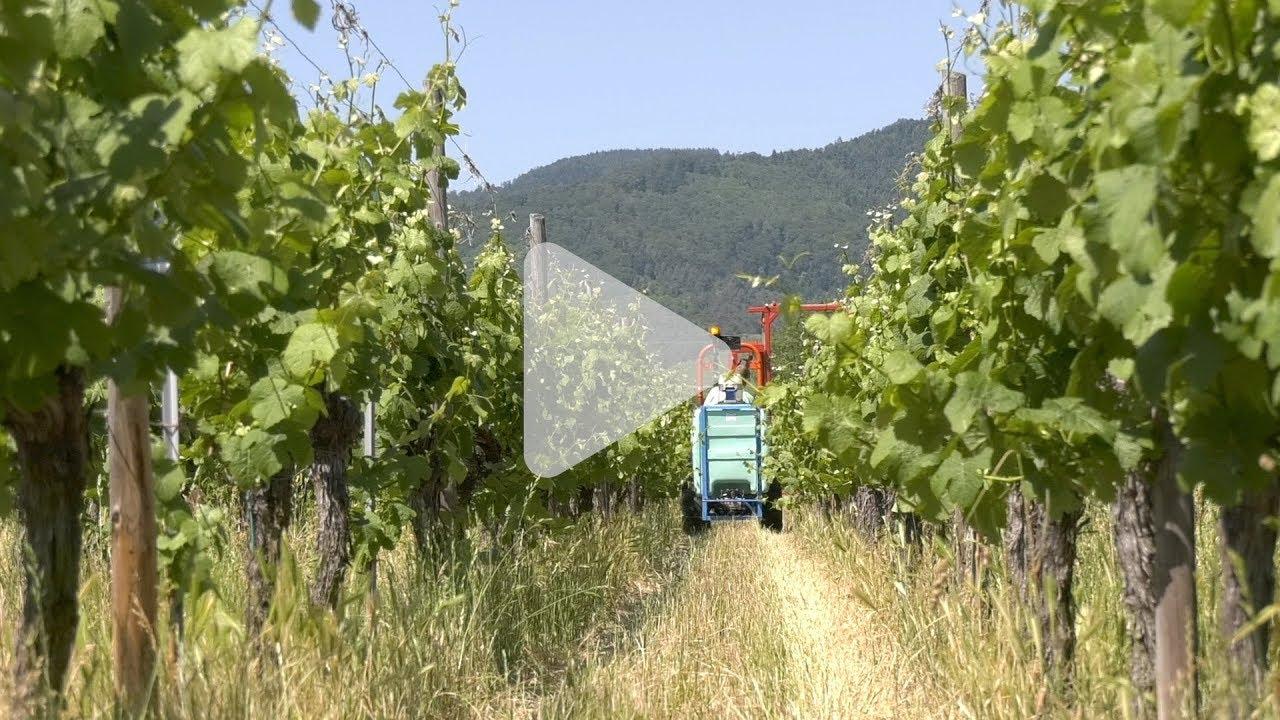 Comment préparer le désherbage des ses vignes en 5 étapes !