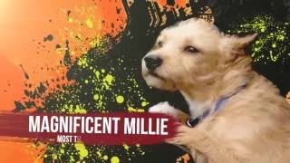 1. Cute Dogs | Cute Puppies | Goldy lockS Band | Let's Take A Ride | Humane Society Dickson County