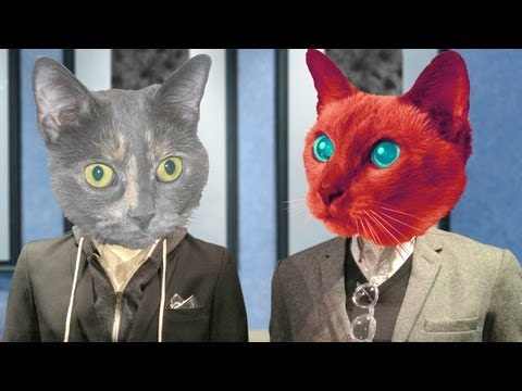 Business Cats, Episode 3: Patience in the workplace