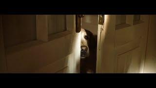 Krótki, ale poruszający filmik o psach. To wideo zmienia podejście ludzi