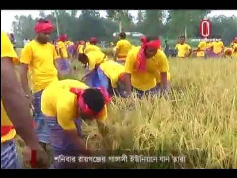Why Agrani Bank officials on paddy reaping? (22-05-2019) Courtesy: Independent TV