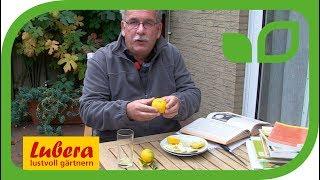 Der Geschmack der Citrus Yuzu