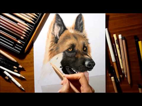 Drawing Subscribers' Pets #3 ❤ Hendrix, German Shepherd Dog From Canada - Speed Draw